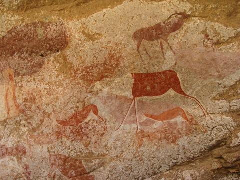 Painted bichrome antelope